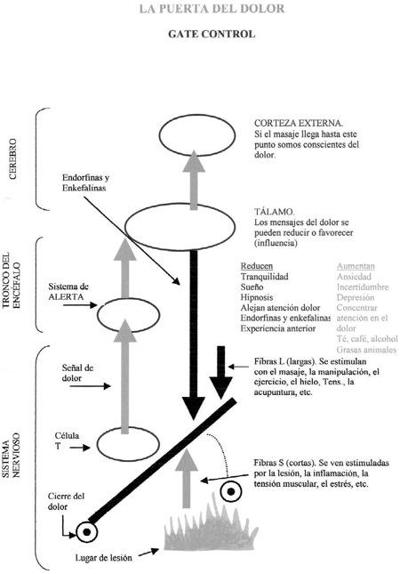 ANATOMIA DEL DOLOR - Blog Kinesiología & Antiterapia